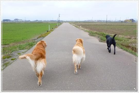 2010,3,2お散歩3