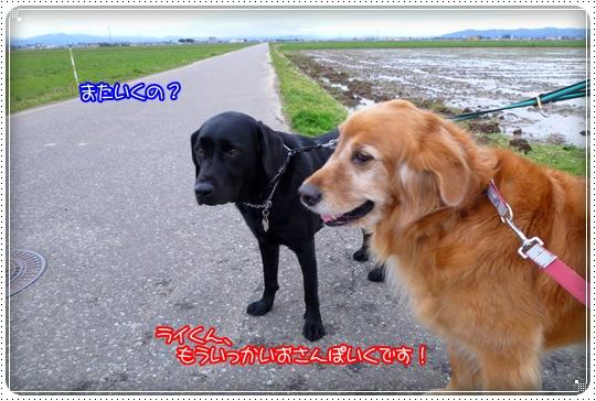 2010,3,5お散歩5