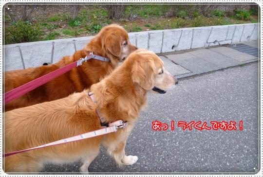 2010,3,5お散歩4