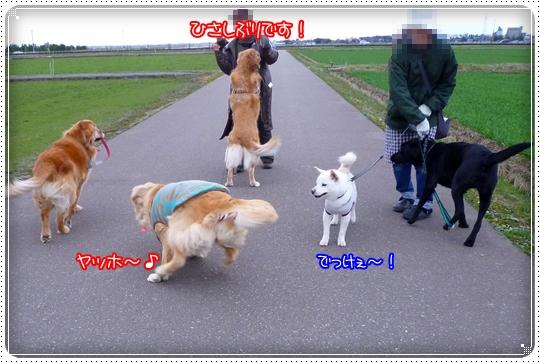 2010,3,5お散歩7