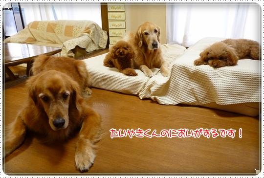 2010,3,6お散歩6