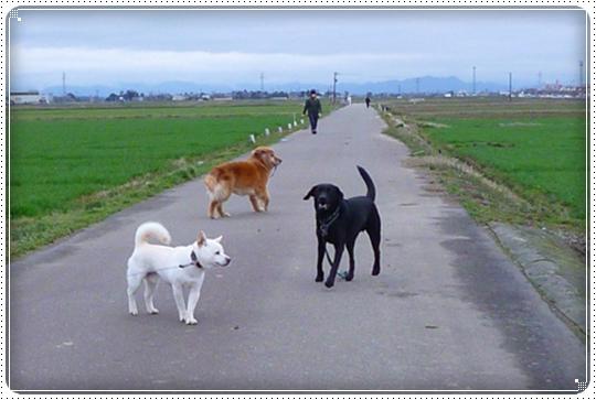 2010,3,6お散歩12