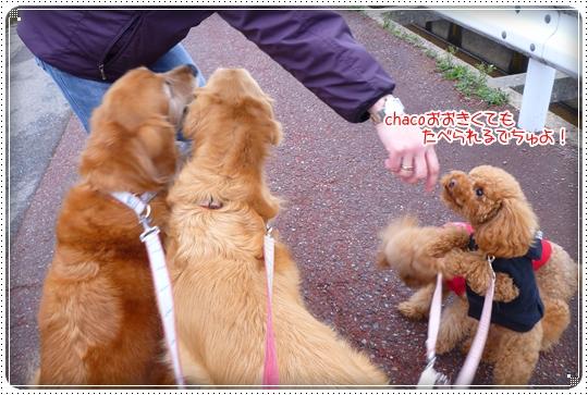 2010,3,6お散歩10