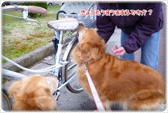 2010,3,6お散歩9