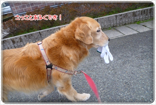 2010,3,7お散歩5