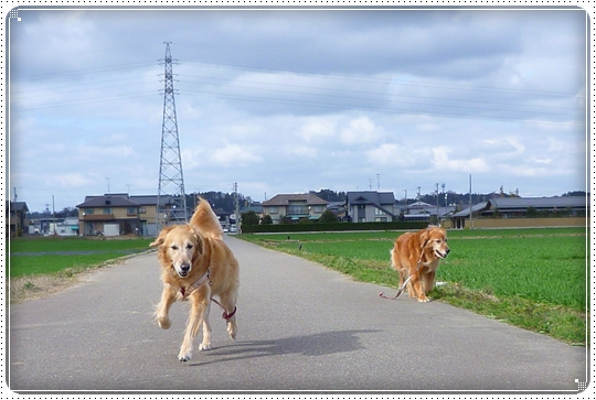 2010,3,8お散歩3