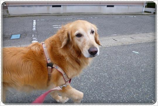 2010,3,8お散歩2