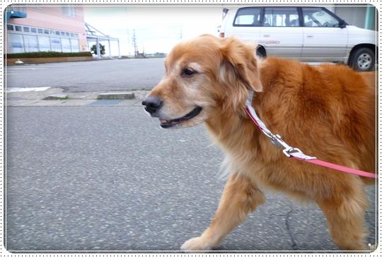 2010,3,8お散歩1