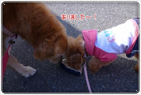 2010,3,8お散歩12
