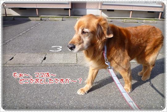 2010,3,8お散歩11