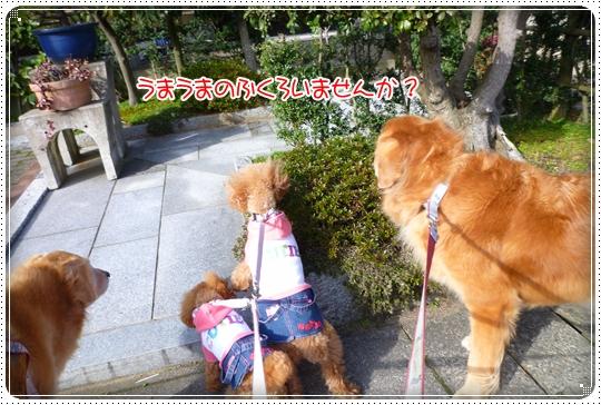 2010,3,8お散歩9