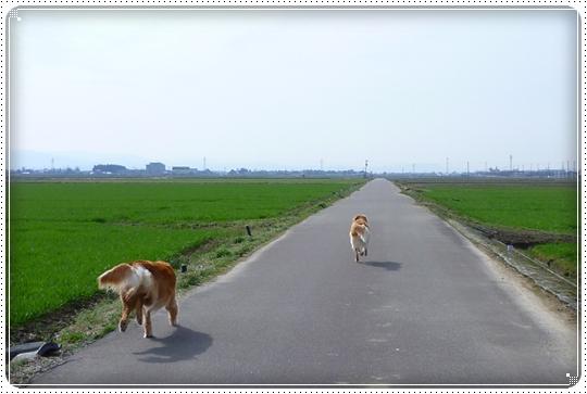 2010,3,12お散歩4