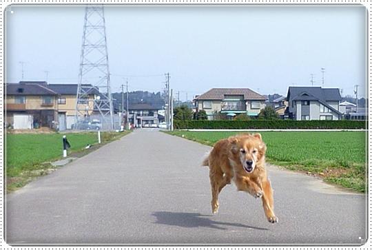 2010,3,12お散歩3