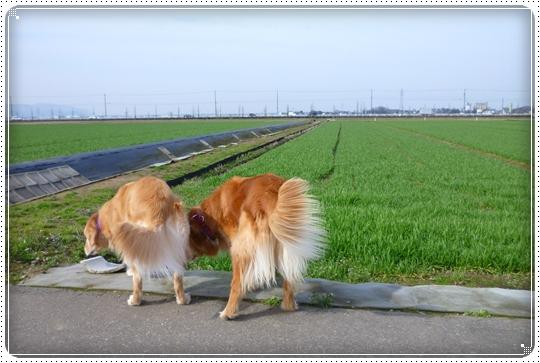 2010,3,12お散歩12