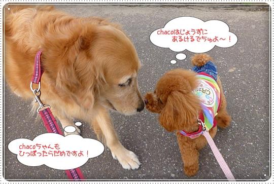 2010,3,13お散歩5