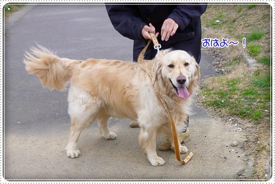 2010,3,15お散歩6