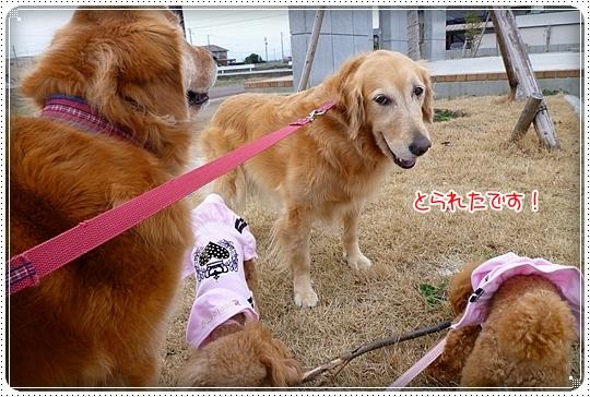 2010,3,15お散歩3