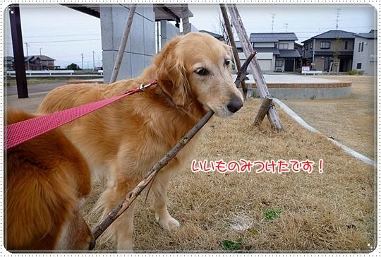 2010,3,15お散歩2