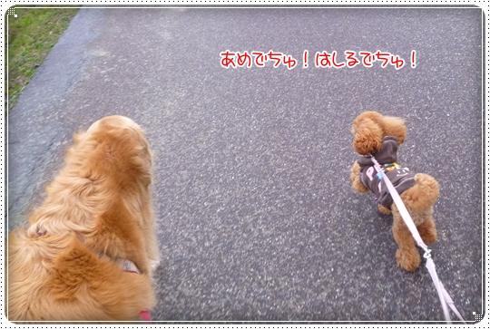 2010,3,16お散歩9