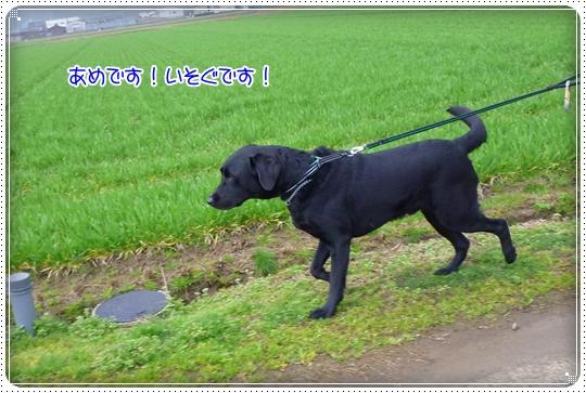 2010,3,16お散歩8