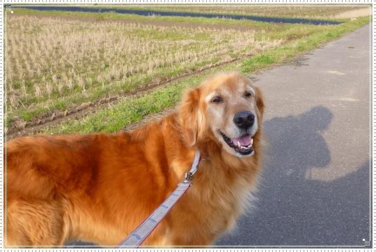2010,3,17お散歩4