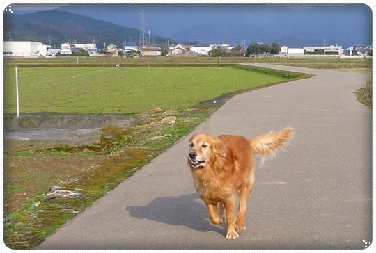 2010,3,17お散歩3