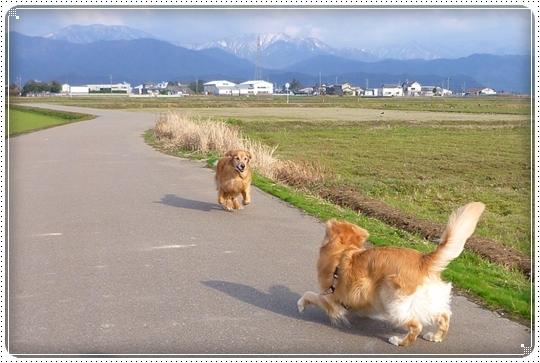 2010,3,17お散歩2