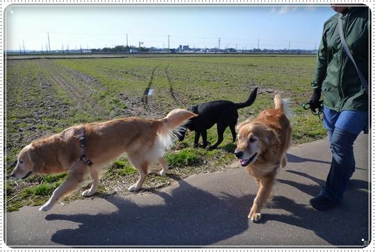 2010,3,19お散歩3