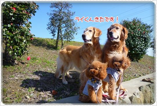 2010,3,19お散歩2