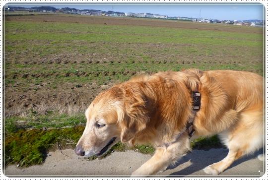 2010,3,19お散歩11