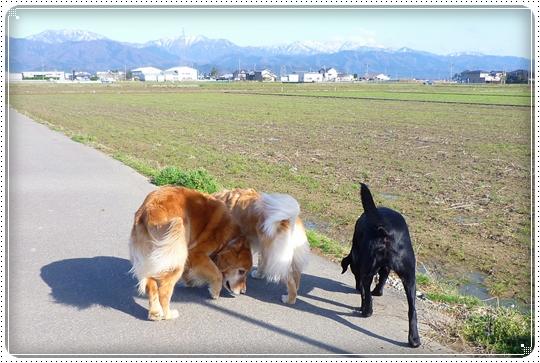 2010,3,19お散歩10