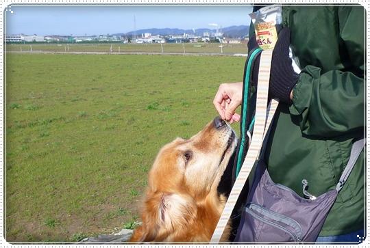 2010,3,19お散歩8