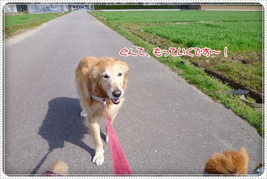 2010,3,20お散歩4