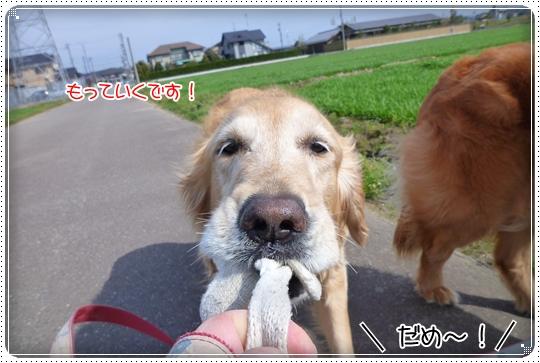 2010,3,20お散歩3