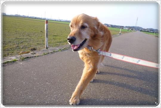 2010,3,20お散歩11