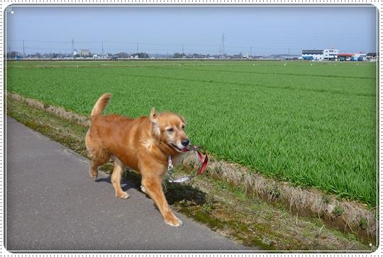 2010,3,20お散歩7