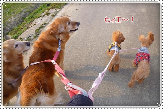 2010,3,20お散歩13