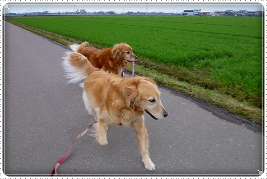 2010,3,7お散歩6