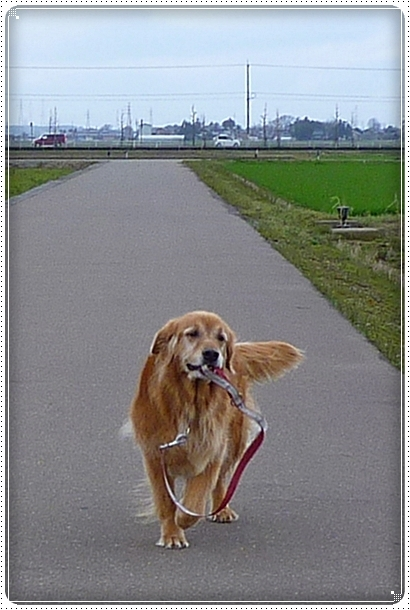 2010,3,7お散歩3