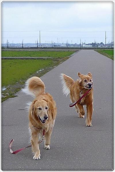 2010,3,7お散歩7