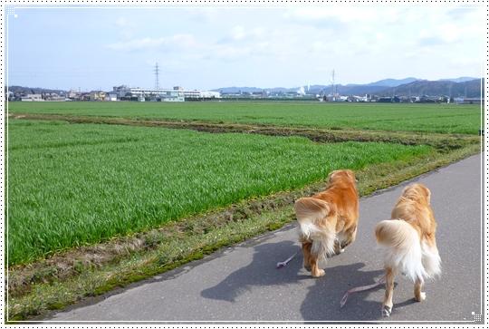 2010,3,22お散歩8