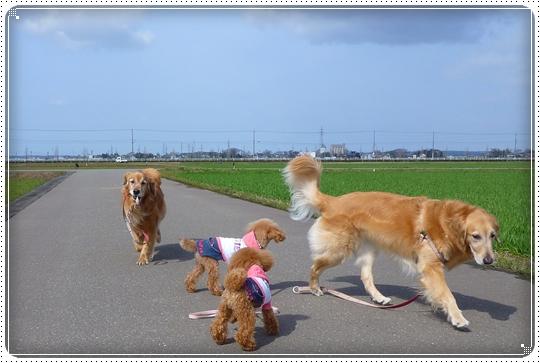 2010,3,22お散歩7