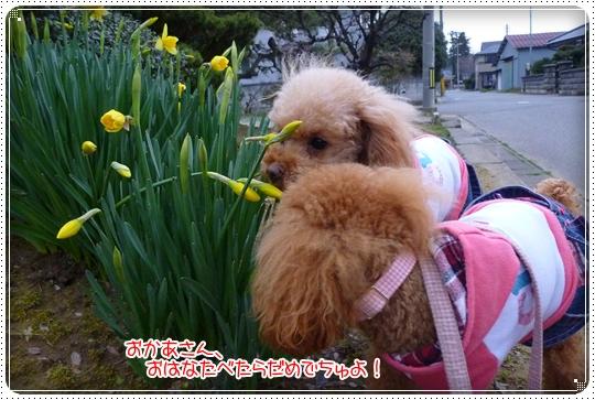2010,3,22お散歩11