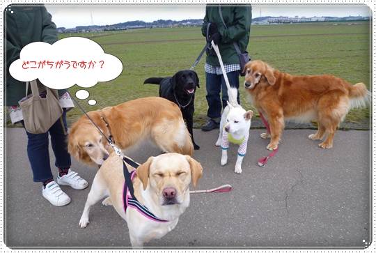2010,3,23お散歩11