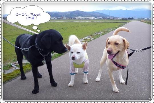 2010,3,23お散歩9