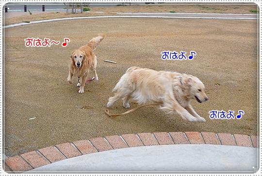 2010,3,24お散歩3