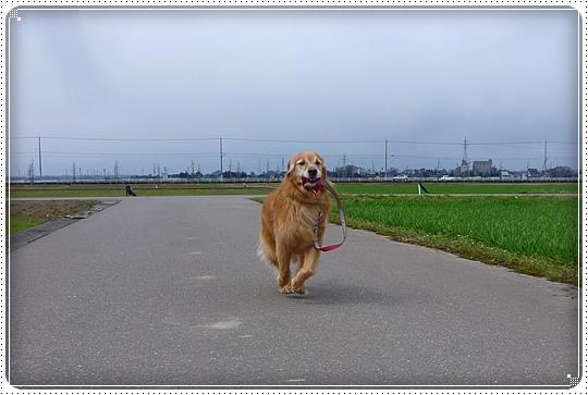 2010,3,27お散歩3