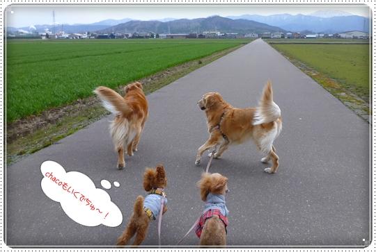 2010,3,27お散歩10
