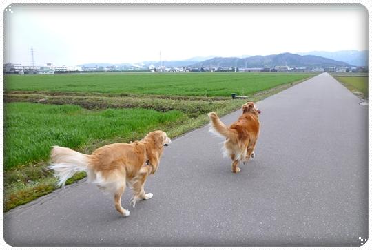 2010,3,27お散歩9