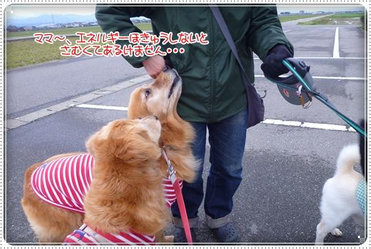 2010,3,29お散歩6